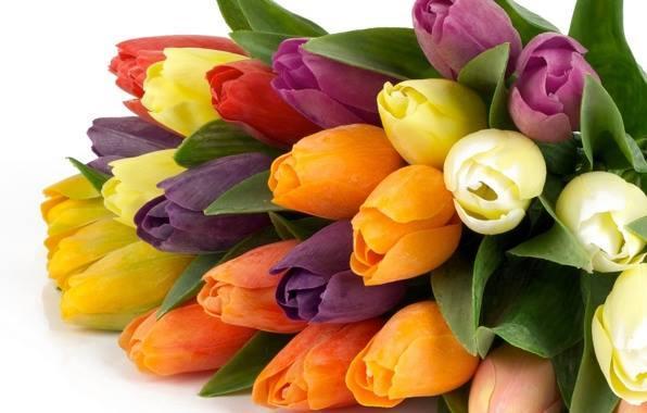 Մայրության եւ գեղեցկության տոն՝ Ապրիլի 7